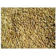 Саратов-доска объявлений о продаже зерновых доска объявлений в чудово работа